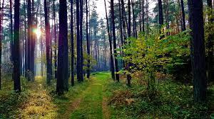 關於在立陶宛種植植物